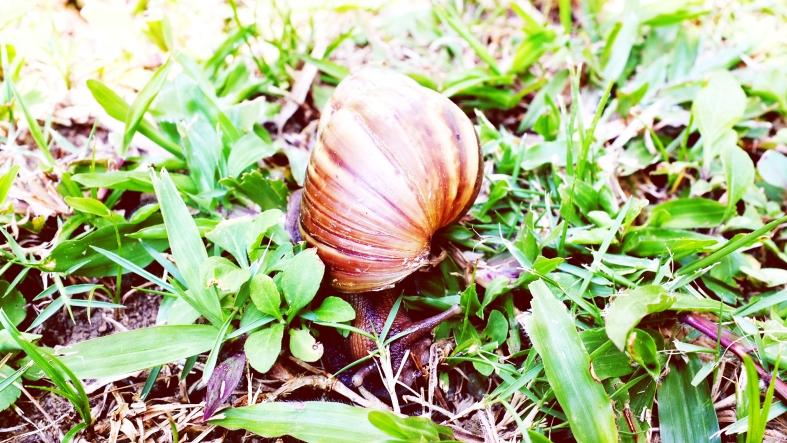 Morning Snail!